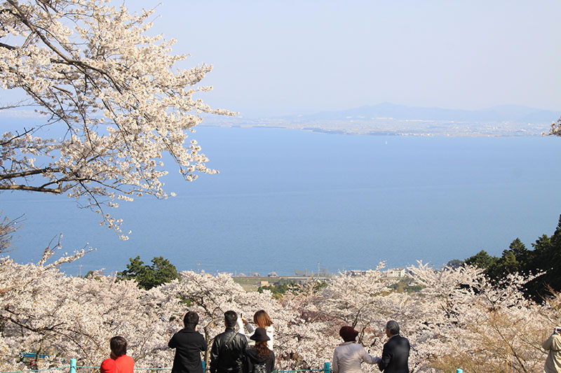 桜_5-02びわ湖大津観光協会_びわ湖バレイ2