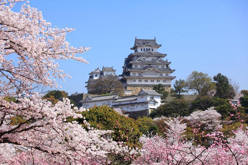 桜_5-01フリー素材_姫路城