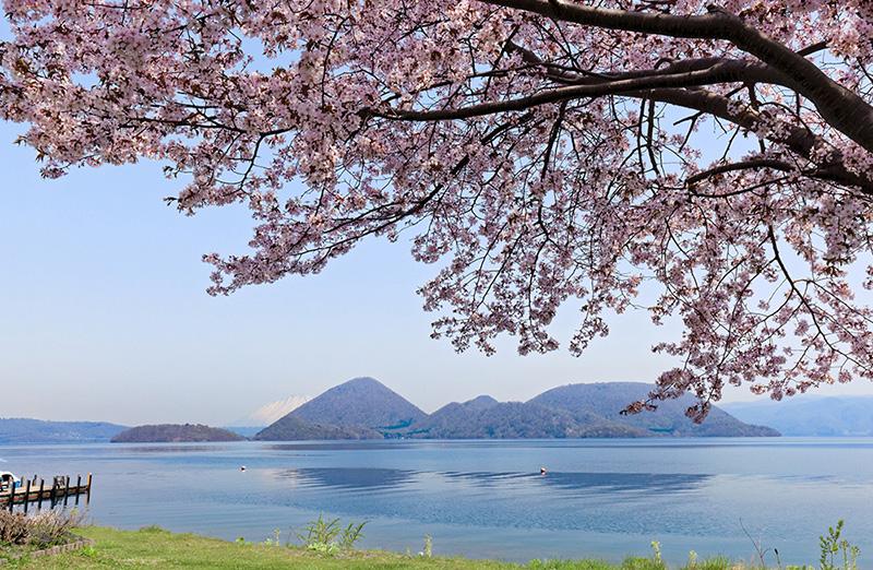 桜_1-04洞爺湖湖畔