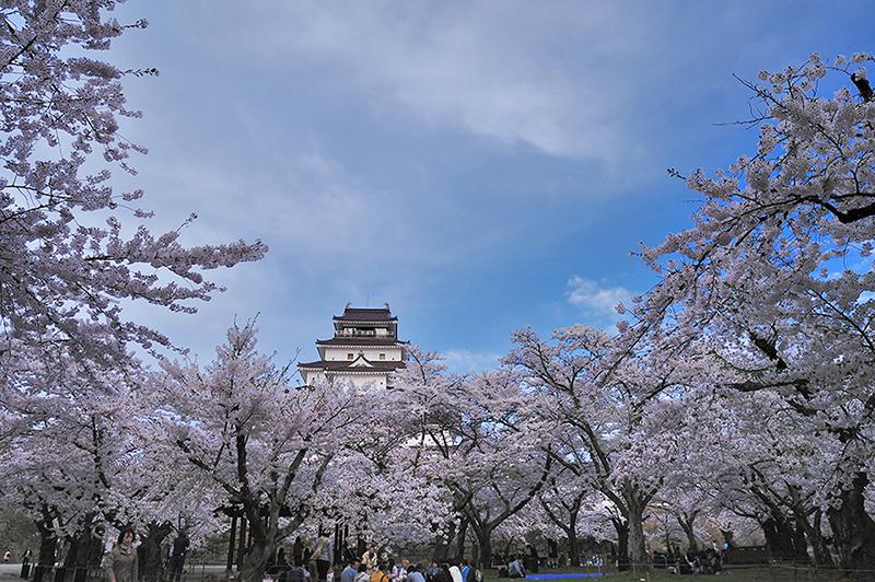 桜_2-08福島県提供_会津鶴ヶ城