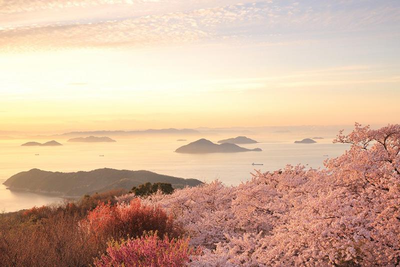 桜_7-01紫雲出山