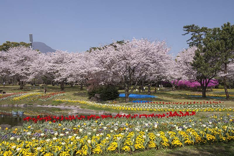 桜_8-04大分市提供_別府公園Library_931
