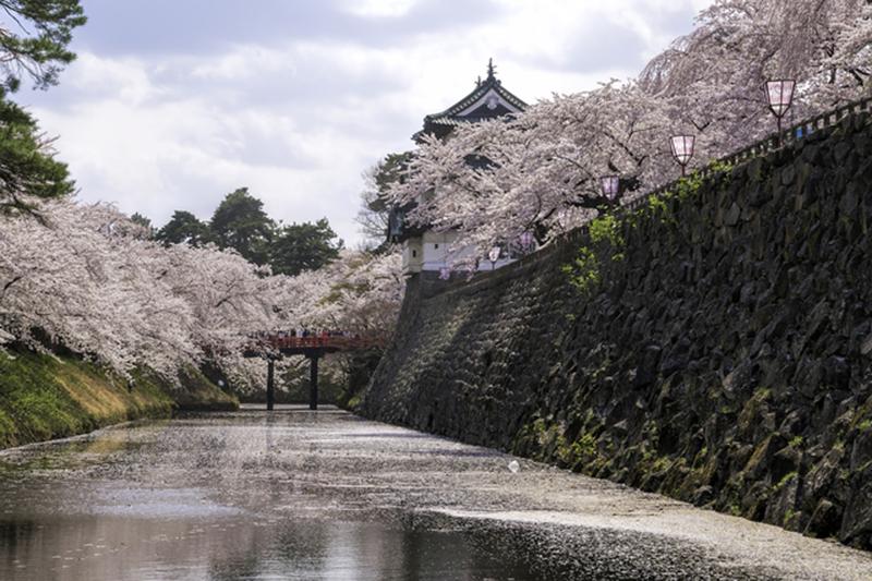 桜_2-01弘前城