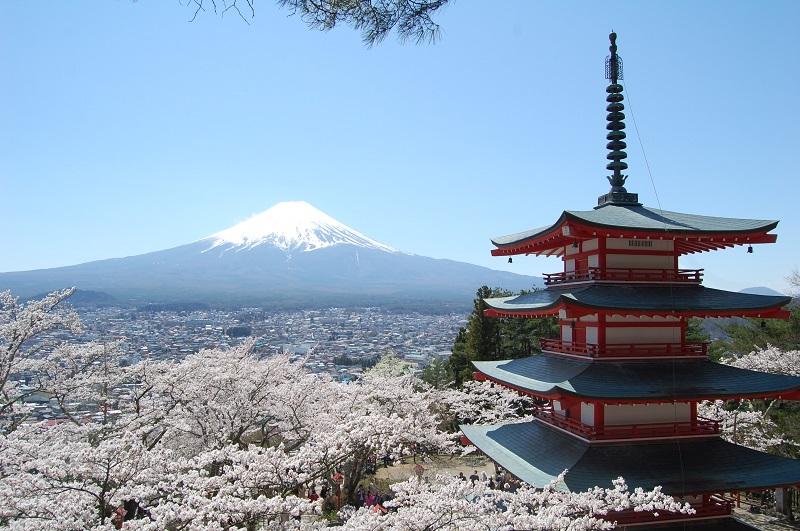 桜_3-06新倉淺間神社
