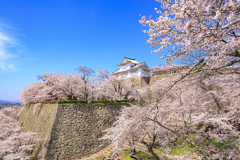 桜_6-03岡山提供_津山城