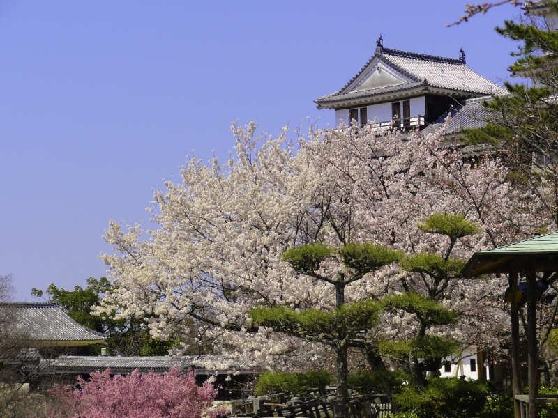 松山城 (6-2)
